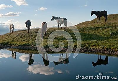 Horses near the lake