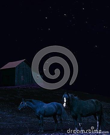 Horses at night