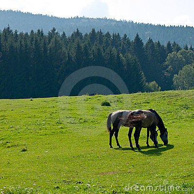 Free Horses On Pasture Royalty Free Stock Images - 24050049