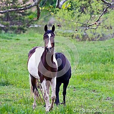 Horses on Overcast Day