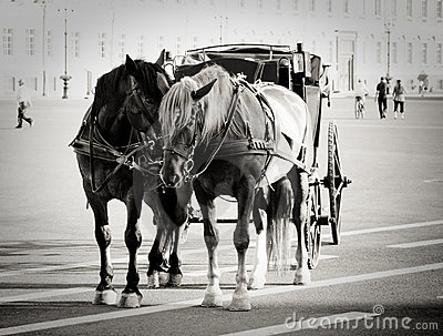 Horses on the Palace Square