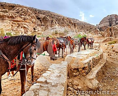 Horses of Petra