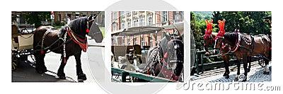 Horses photo collage