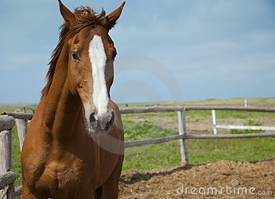Horses portrait / farm
