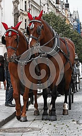 Horses in Prague