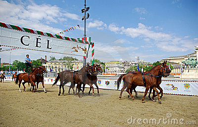 Horses on racetrack Editorial Stock Photo