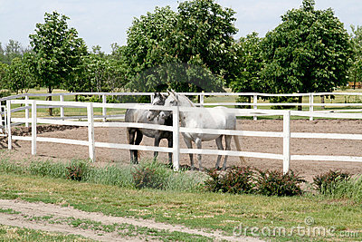 Horses on ranch