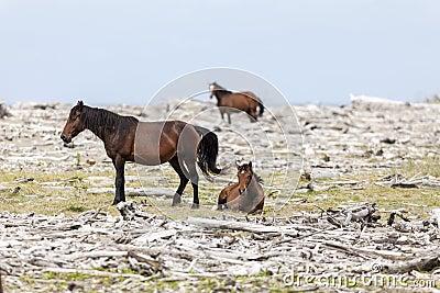Horses rest