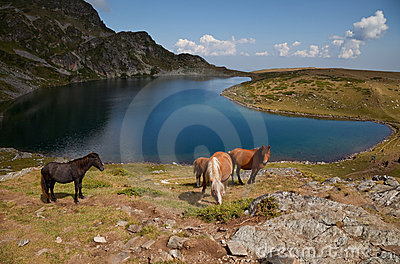 Horses by the Rila mountains lake
