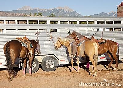 Horses at rodeo
