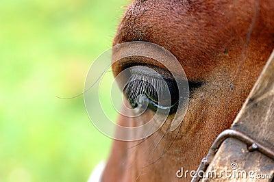 Horses s eye