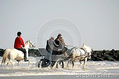 Horses through the sea