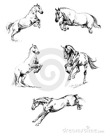 Horses - sketches a pencil