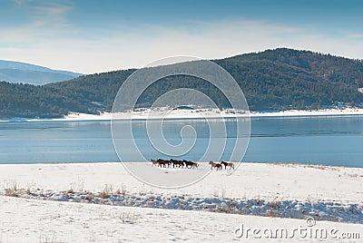 Horses and snow lake