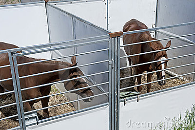 Horses in stable.