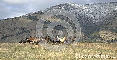 Horses stampede