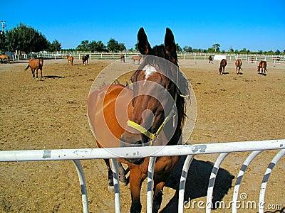 Horses in Stud Farm