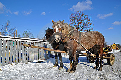 Horses in a team