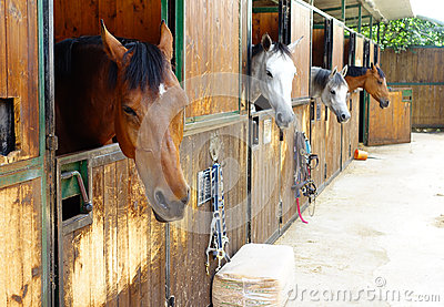 riding stables business plan