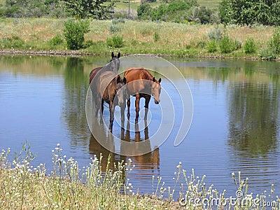 Horses by Three