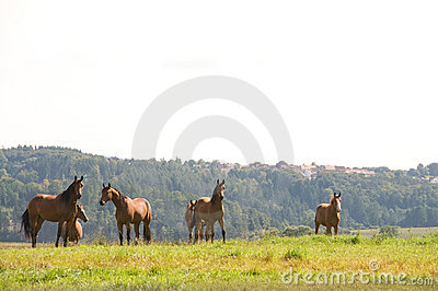Horses at the top of the hill.