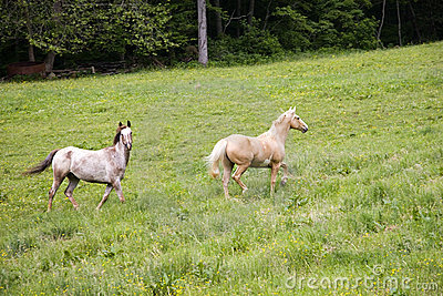 Horses Trotting Royalty Free Stock Photography - Image: 812577