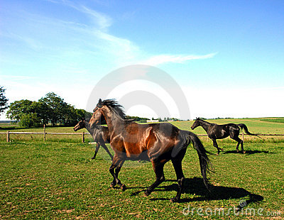 Horses trotting in field