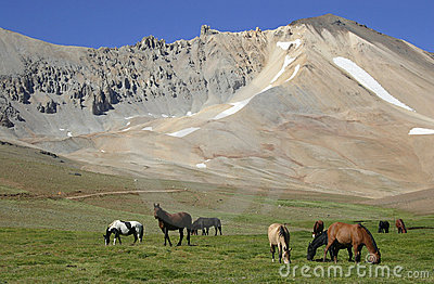Horses In The Valley Stock Images - Image: 2806864