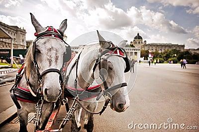 Horses in Vienna, Austria