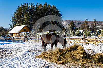 Horses in the village in the Ural Mountains