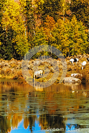 Horses by Water in Fall