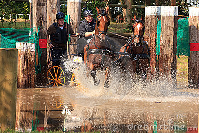 Horses In Waterbench Stock Images - Image: 21000864