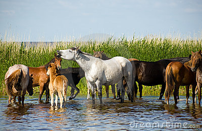 Horses on the watering.