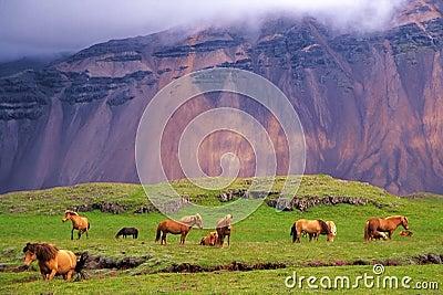 Horses in the wild