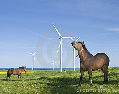 Horses and wind turbines