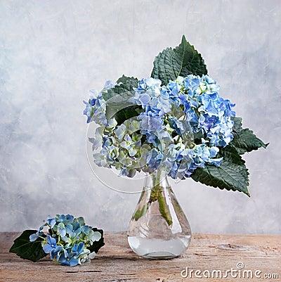 Hortensia Flowers