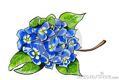 hortensie im blau stock abbildung bild 52334634. Black Bedroom Furniture Sets. Home Design Ideas