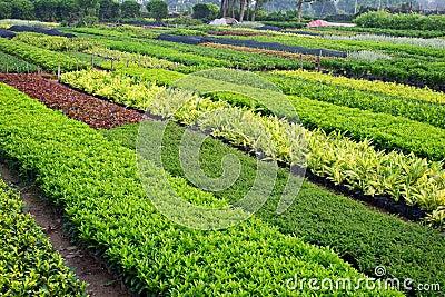 Horticultural farm