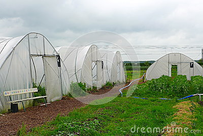 Horticulture in plastic tents