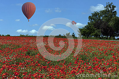 Hot Air Balloons - Poppy Field - England