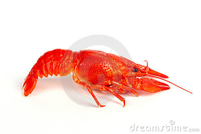 Hot boiled crayfish