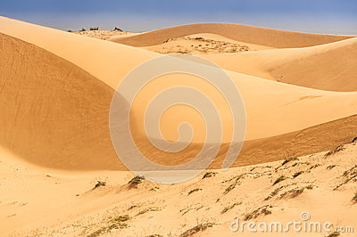 Desert shapes with dry roots surrounded by blue sky