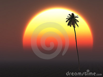 Hot Tropical Sun