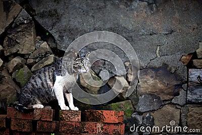Hou Tunnel s Cat in Taiwan