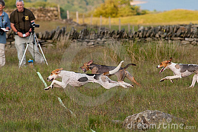 Hound Trail photo finish Editorial Stock Photo