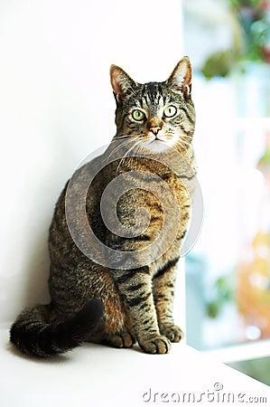 House Cat by window