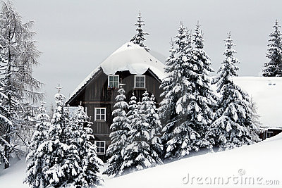 House in christmas trees