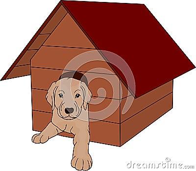 House dog