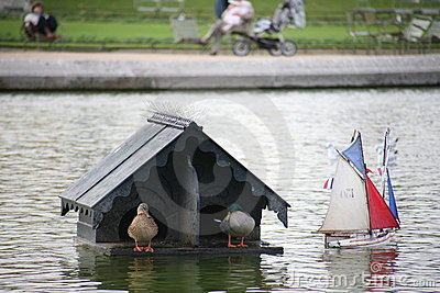 House of the ducks