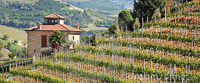 House on hill with vineyards in northern Italy.